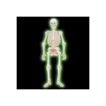 "GLOW IN THE DARK   36"" SKELETON"