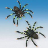 Painted Spiders - 12 Pack
