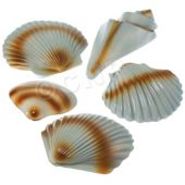 Sea Shell Decorations - 5 Pack