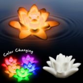 White Floating Multi Color Lotus Flower