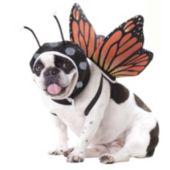 Butterfly Pet Costume
